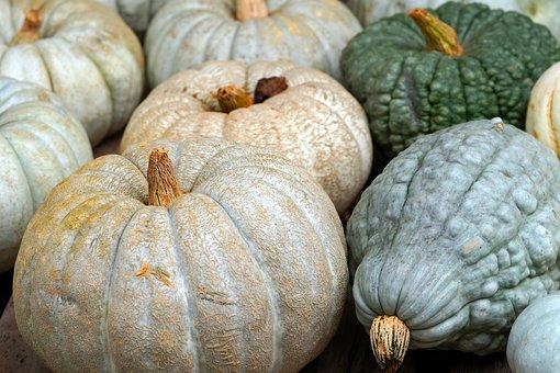 Pumpkin, Vegetables, Harvest, Organic, Fall, Nature