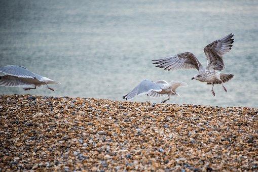 Seagulls, Beach, Sea, Seaside, Sand, Ocean, Birds
