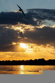 Sunset, Sea, Seagulls, Flying, Silhouette, Birds, Water