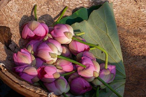 Flowers, Petals, Lotus, Bouquet, Floral Arrangement
