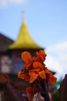 Gladiolus, Flower, Orange Flower, Petals, Orange Petals