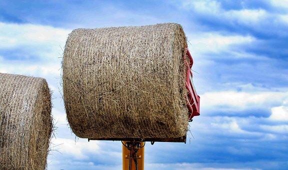 Hay, Plant, Rural, Grass, Farm