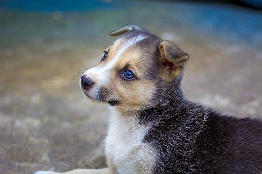 Dog, Puppy, Pet, Canine, Animal, Fur, Snout, Eyes