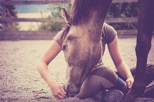 Horse, Foal, Girl, Yearling, Pony, Animal, Mammal