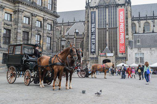 Horse, Carriage, Building, Dutch, Netherlands