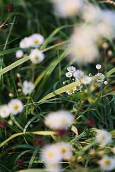 Flowers, Field, Meadow, Plants, Blossom, Flora