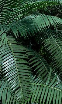 Ferns, Fronds, Leaves, Foliage, Green, Greenery, Lush