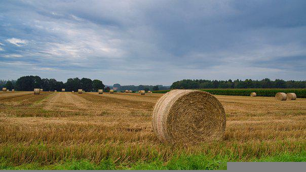 Hay Bales, Straw Bale Harvest, Agriculture, Hay Field