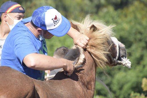 Horse, Cutting Mane, Man, Tradition, Mane, Animal
