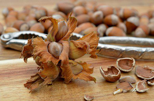 Hazelnuts, Nuts, Nutshell, Nutcracker, Fruit, Organic