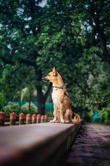 Animal, Dog, Park, Mammal, Canine, Pet, Outdoors, Band