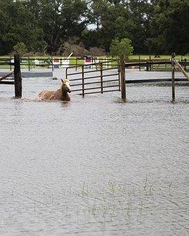 Horse, Pony, Swimming, Water, Animal, Flood, Hurricane