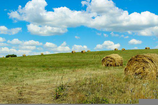 Field, Meadow, Hay, Hay Bales, Pasture, Hills, портрет