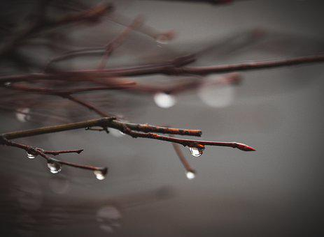 Twigs, Raindrops, Nature, Dewdrops, Forest, Wood, Dark