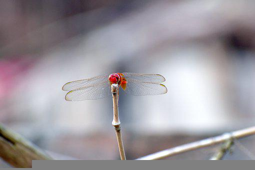 Dragonfly, Insect, Branch, Animal, Plant, Nature