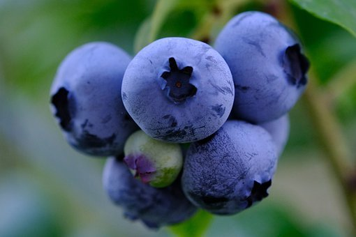 Fruit, Blueberry, Organic, Healthy, Berry