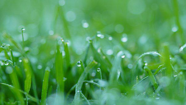 Grass, Lawn, Morning Dew, Dewdrops, Nature, Landscape