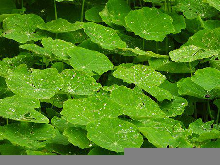 Leaves, Plants, Green Plants, Water, Cold Winter, Green