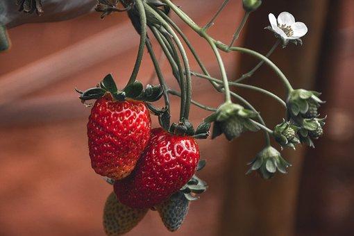 Fruit, Strawberries, Organic, Berry, Healthy, Sweet