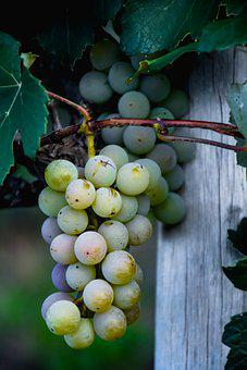 Fruit, Grapes, Organic, Sweet, Healthy, Vine, Harvest