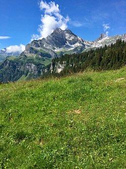 Mountain Meadow, Mountain, Glarus, Braunwald, Alpine