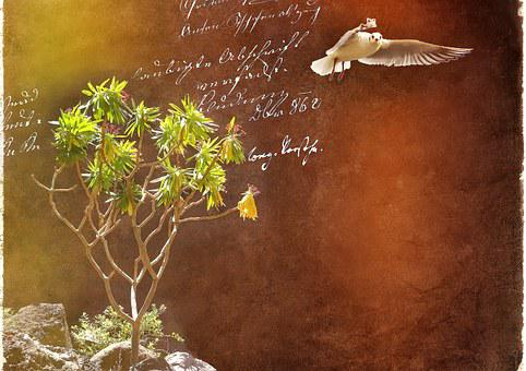 Spurge, Plant, Seagull, Bird, Font, Handwriting