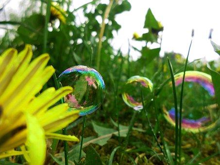 Dandelion, Bubbles, Tiny, Dandelions, Garden, Nature