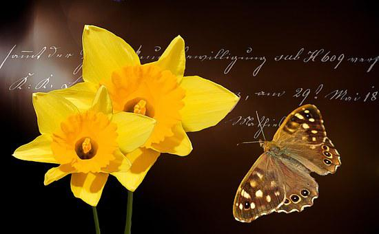 Daffodils, Flower, Flowers, Yellow, Plant, Spring