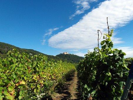 Palatinate, Hiking, Hambach Castle, Rhine Valley, View