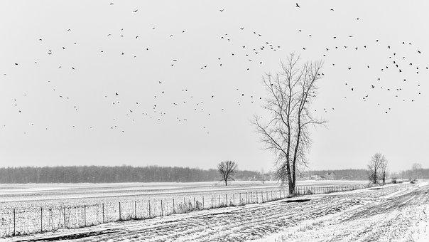 Landscape, Flown Away, Rumors, Birds, Trees, Clo