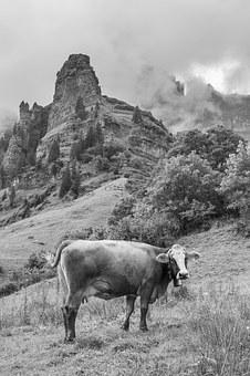 Cow, Mountains, Alp, Switzerland, Canton Of Glarus