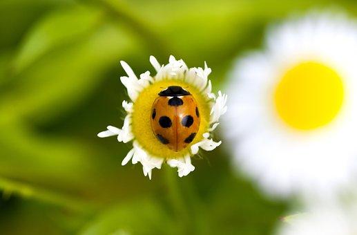 Ladybug Bedbugs, Pool, Flowers, Plants, Nature, Leaf
