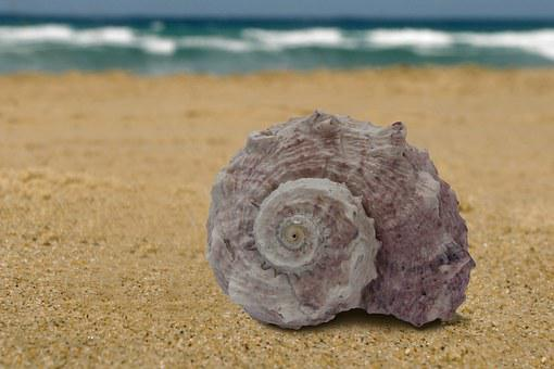 Sea Snail, Snail, Sea, Vacations, Memory, Casing