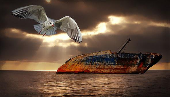 Sea, Lake, Water, Landscape, Seagull, Bird, Ship