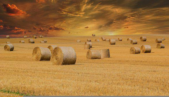 Hayfield, Bales Of Hay, Straw Field, Agriculture