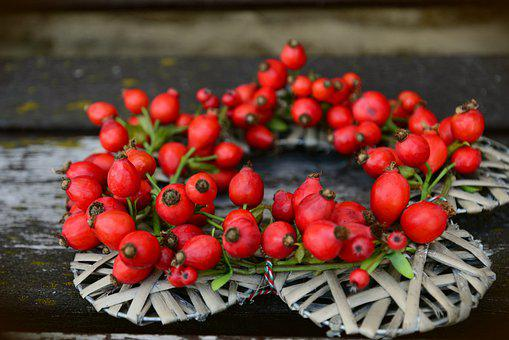 Rosehips, Fruits, Food, Fresh, Healthy, Ripe, Organic