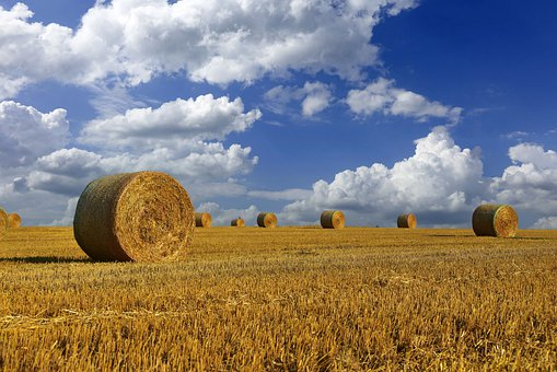 Hay, Straw, Sky, Clouds, Stubble, Harvest, Collections