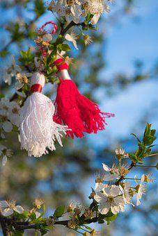 Sakura, Flowers, Cherry Color, White Petals, Petals