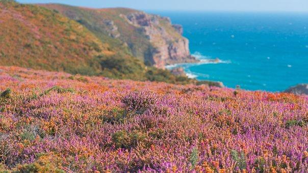 Coast, Coastal Landscape, Brittany, Cap Fréhel, Heather