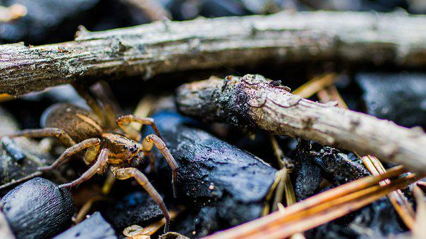 Arthropod, Spider, Entomology, Insect, Species