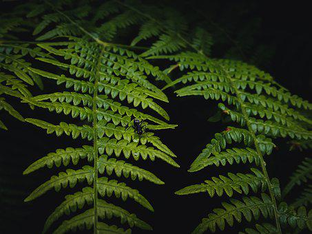 Ferns, Fronds, Leaves, Ant, Foliage, Green, Greenery