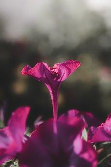 Flower, Petals, Flora, Violet, Nature, Spring, Botany