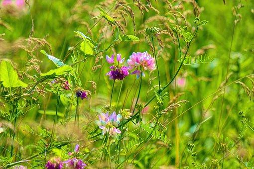 Flowers, Grass, Meadow, Field, Summer, Nature