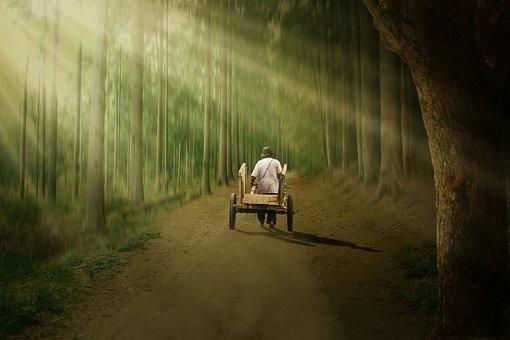 Man, Trees, Pathway, Road, Cart, Light, Scenery, Rural