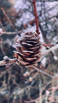 Pine Cone, Nature, Winter, Snow, Tree, Autumn, High