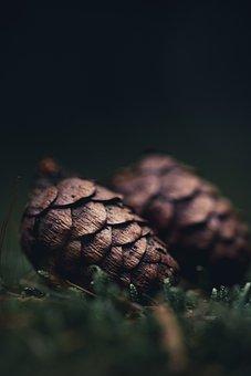 Pine Cones, Tree, Cones, Spruce, Pine Tree, Conifer