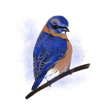 Bluebird, Bird, Watercolor, Eastern Bluebird, Animal