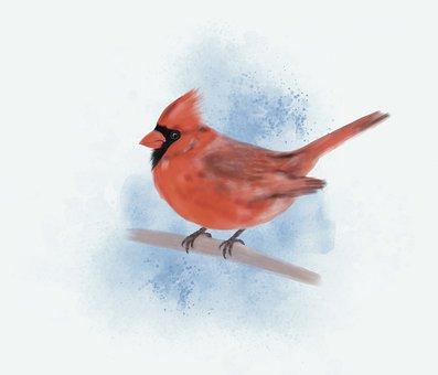 Cardinal, Bird, Watercolor, Redbird, Northern Cardinal