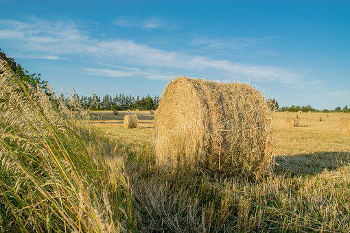 Hay, Bale, Field, Round Bale, Straw, Agriculture, Farm