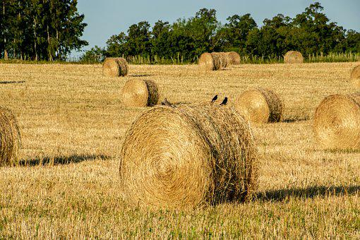 Hay, Bales, Field, Round Bales, Straw, Agriculture